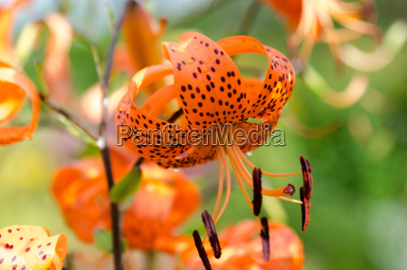 one orange lovely flower from the