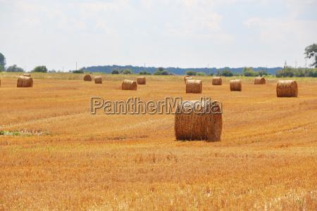 haystacks field sun