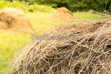 haystacks country side with hay bales