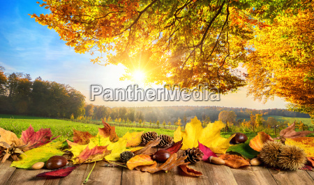 autumn concept with colourful leaves on