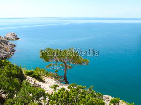 pine tree next to sea