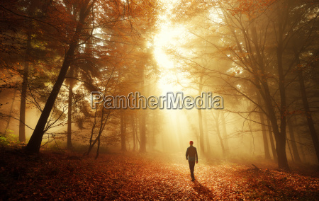 walk, in, the, forest, with, stunning - 18952385