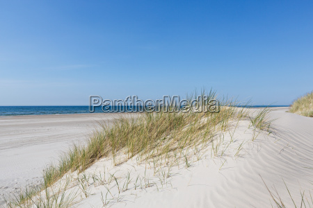 dunes at the north sea in