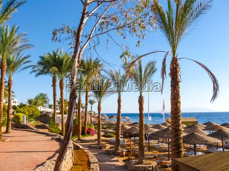 sharm el sheikh egypt beach