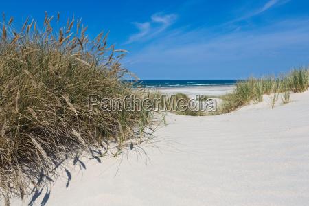 spiaggia costiera e dune di erba