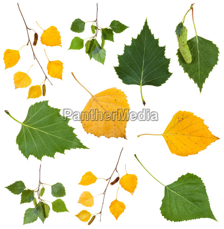 green and yellow autumn leaves of