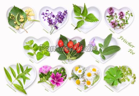 harvest fresh herbal and fruit