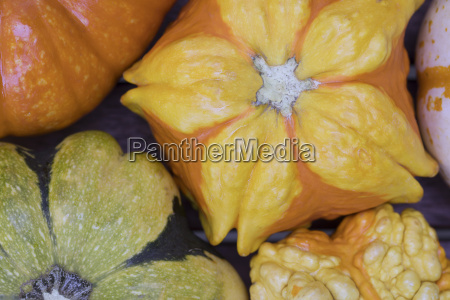 close up of autumn gourd