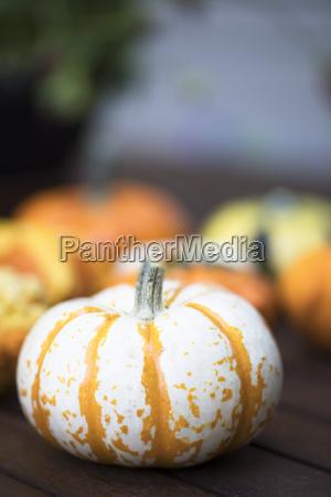 striped autumn gourd