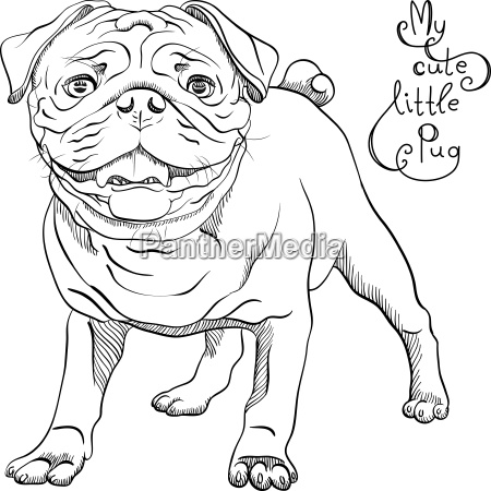 vector sketch cute dog black pug