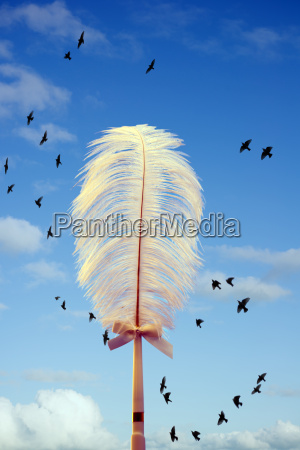 white feather and birds flying