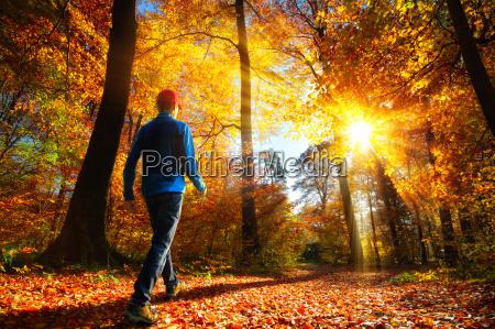 walking in the woods in glorious