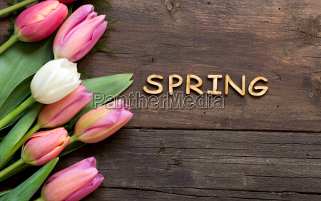 pink tulips and the word spring