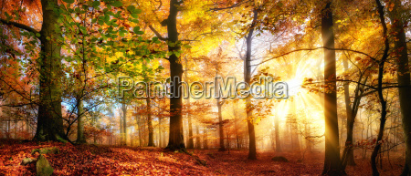 sun shines in a colorful forest