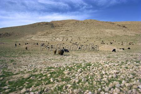 paisaje cerca de shiraziranoriente medio