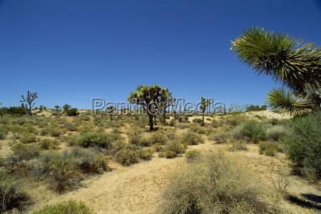 paseo viaje eeuu horizontalmente california al