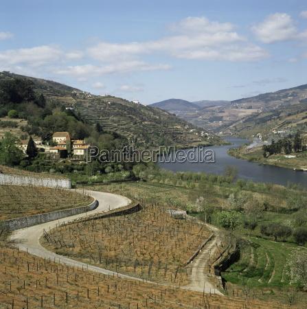 vineyards of quinta do mourao near