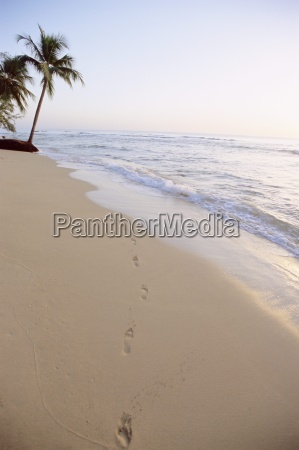 footprints and palm tree on beach
