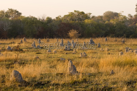 termite mounds kafue national park zambia