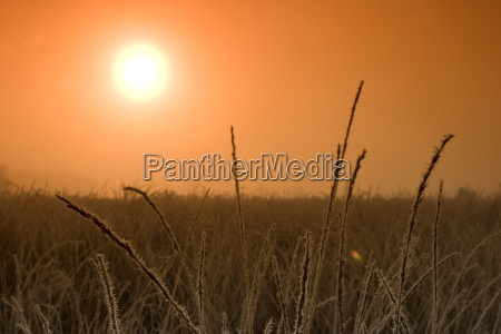 sunrise in the fen hiller moor