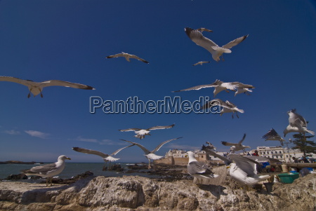 seagulls on rocks on the coast
