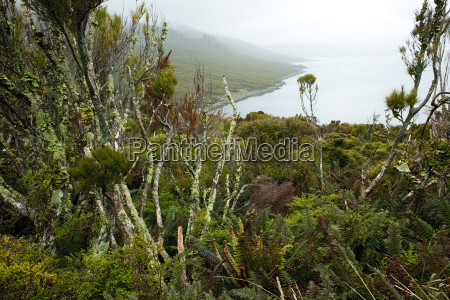flora on campbell island sub antarctic