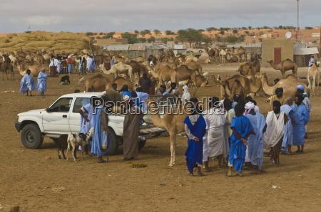 men trading camels at the camel