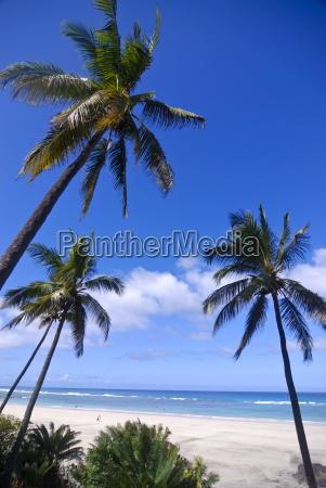 beautiful sandy beach and palms at