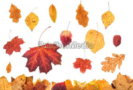 various autumn leaves falling on leaf