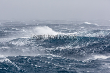 gale force westerly winds build large