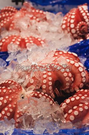 octopus at tsukiji fish market tokyo