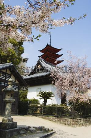 spring cherry blossom at senjokaku five