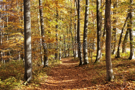 path in a forest in autumn