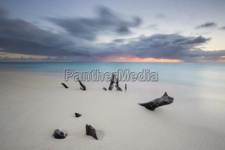 caribbean sunset frames tree trunks on