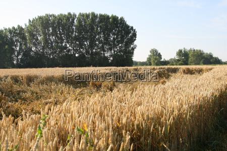 crop failure