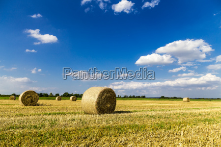 straw bales after the grain harvest