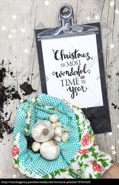 creative, christmas, card, for, a, garden - 19161029