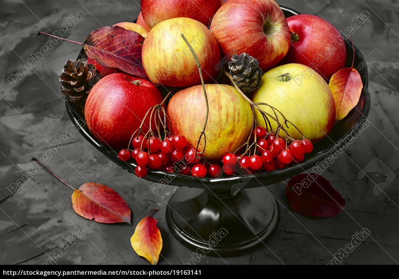 apple, and, viburnum - 19163141
