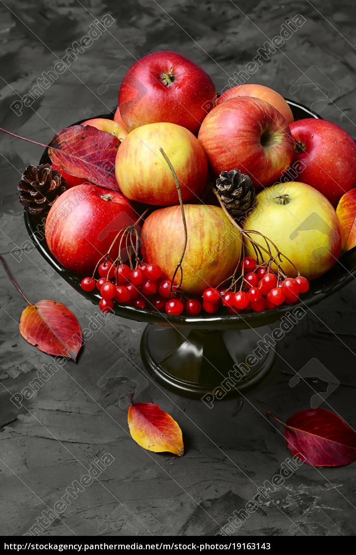 apple, and, viburnum - 19163143