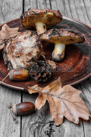 plate, of, forest, mushrooms - 19163191