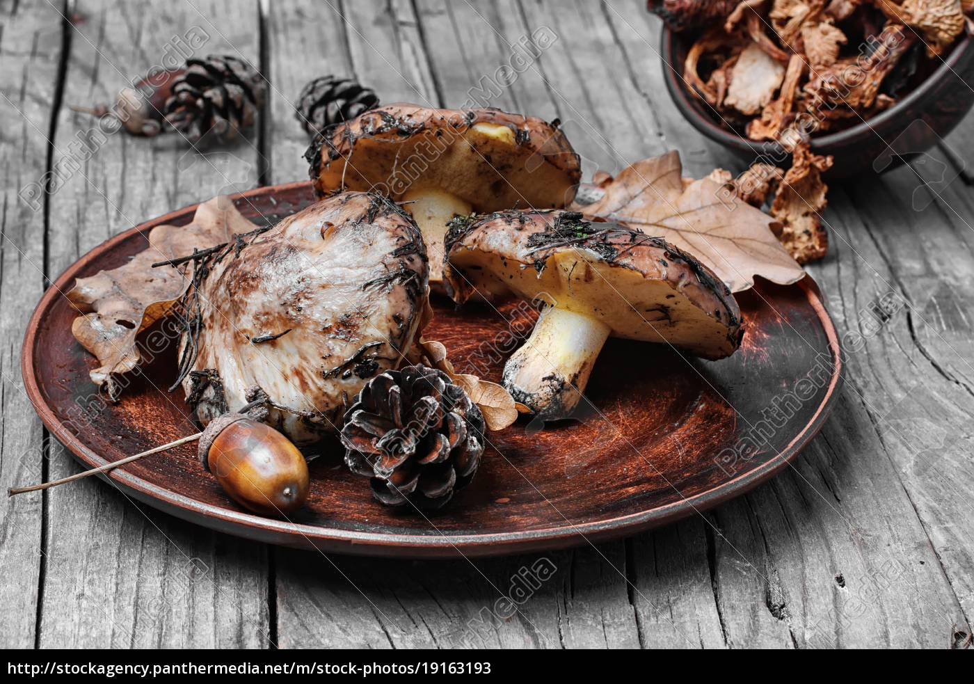 plate, of, forest, mushrooms - 19163193