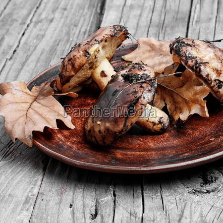 plate, of, forest, mushrooms - 19163199