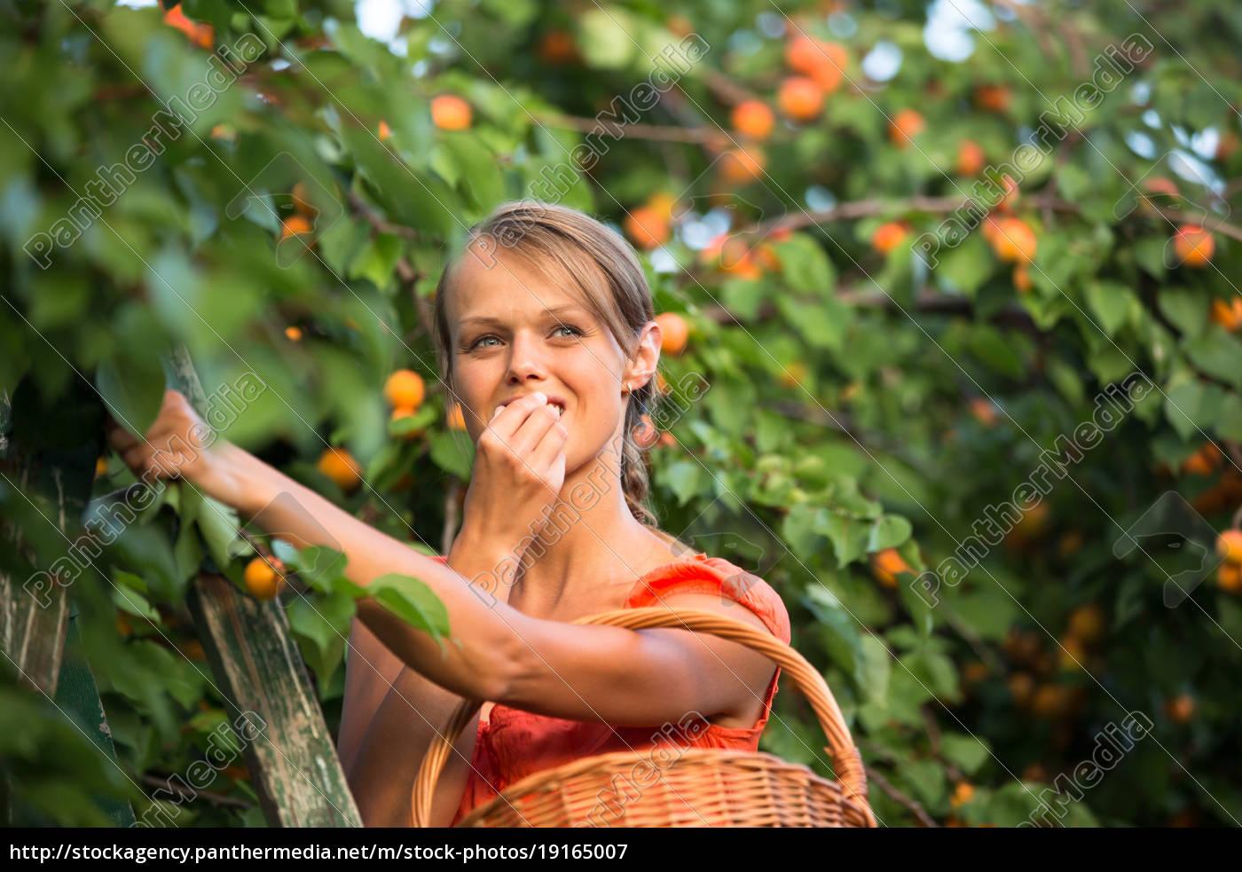 pretty, , young, woman, picking, apricots, lit - 19165007