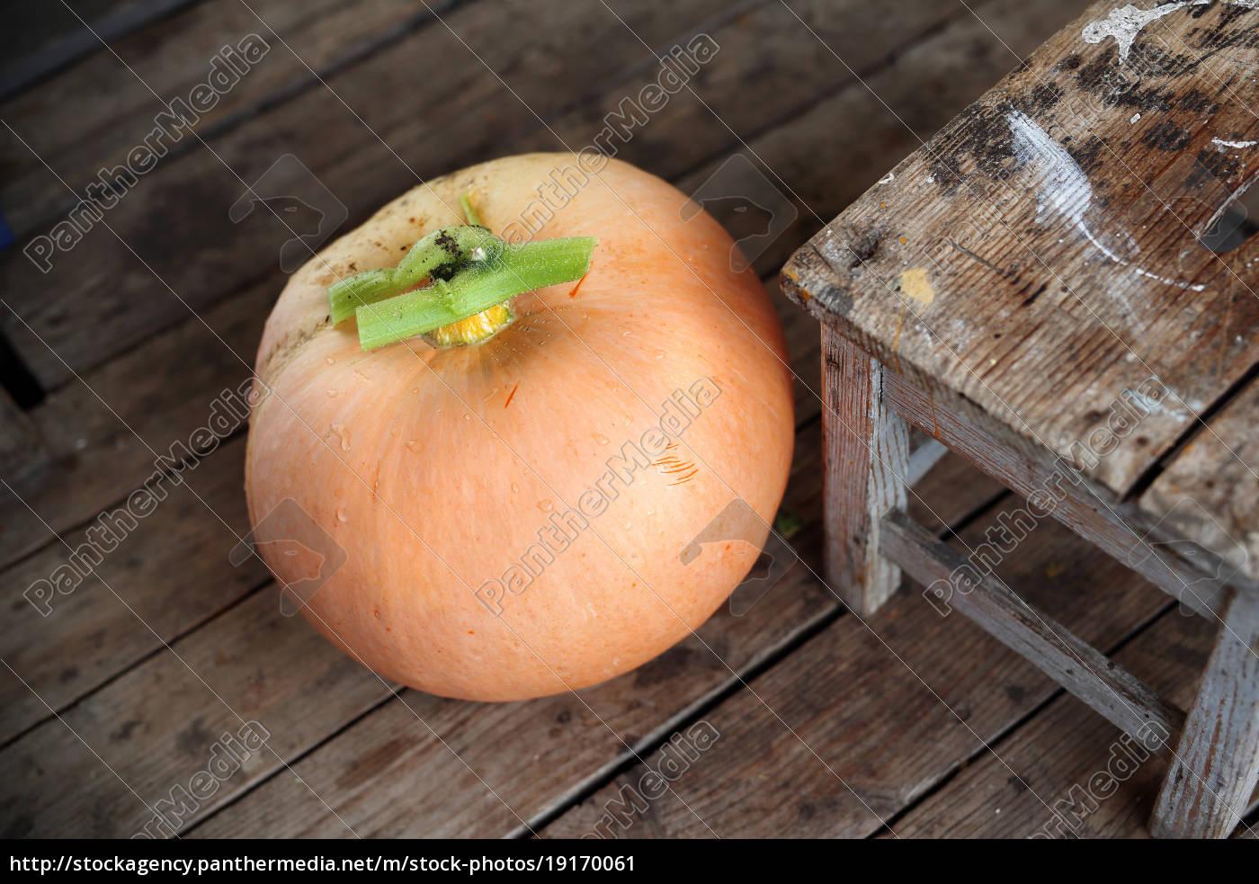 season, the, pumpkin. - 19170061