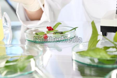 biotechnology in vitro plants plant propagation
