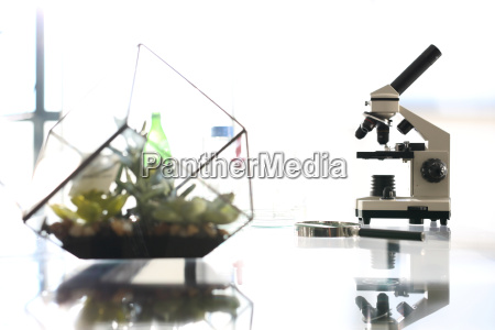 biotechnology, lab, microscope - 19186075
