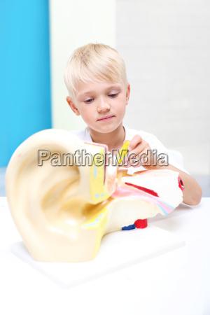 dzieci ogladaja model ludzkiego ucha