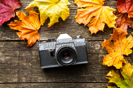 vintage photo camera and dry leaves