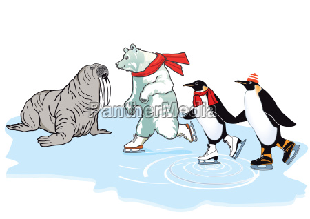 polar, bear, penguin, and, walrus, skating - 19209419
