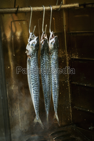 three mackerel hanging in a fish